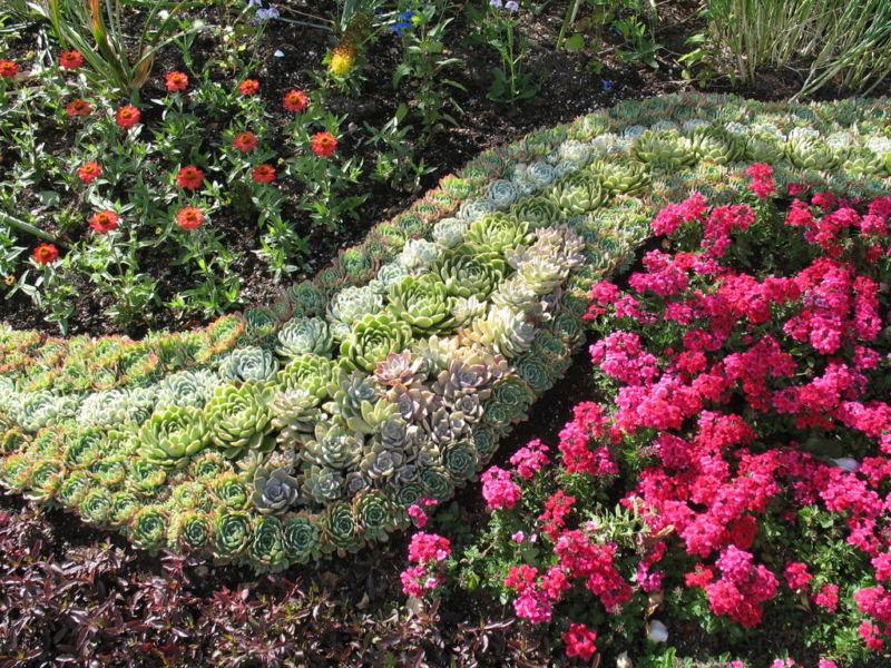 клумбовые цветы