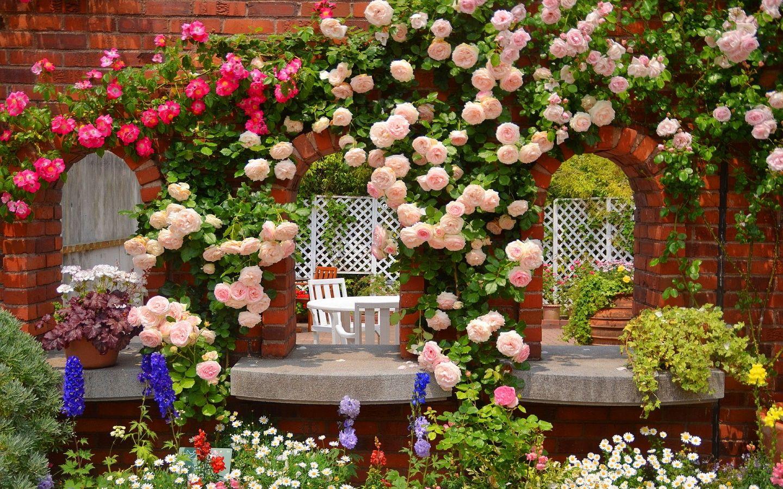 Черенкование роз в стаканчиках в домашних условиях   о розе