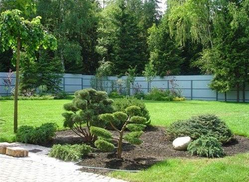 Быстрорастущие растения: что выбрать для выращивания в саду и доме