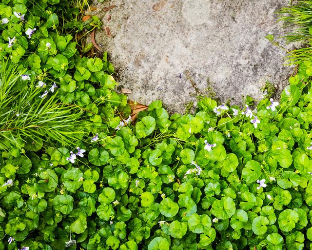 Почвопокровные цветы: почвопокровные растения, цветущие все лето, основные виды почвопокровных многолетников