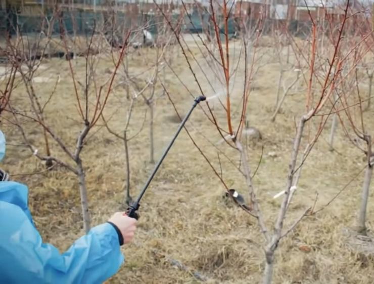Календарь обработки сада и огорода от вредителей и болезней: весна, лето, осень, зима