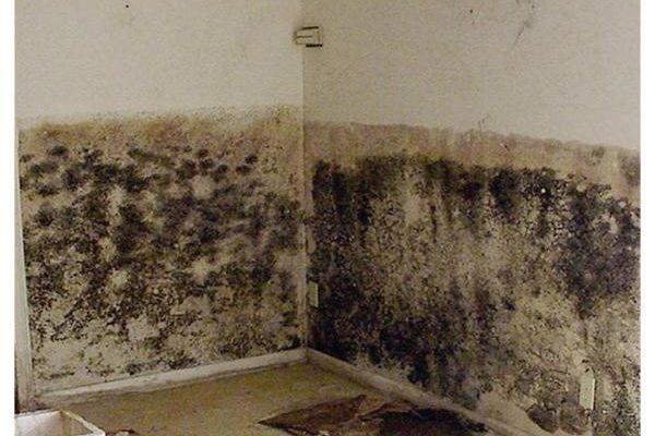 Грунтовка против плесени и грибка по бетону