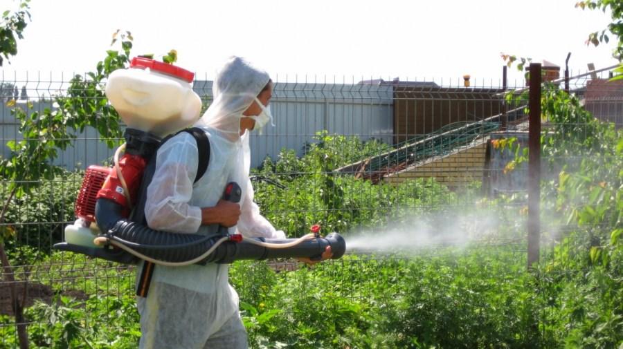 Опрыскивание яблонь весной от болезней и вредителей: когда и чем обрабатывать