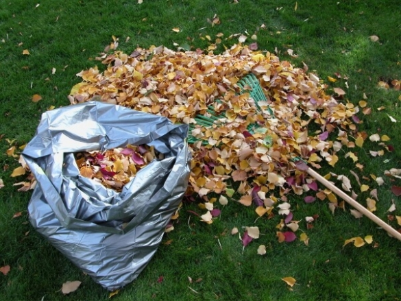 Куда девать опавшие осенью листья на даче, в саду