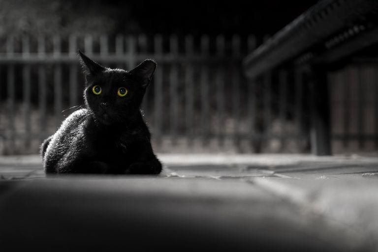 Черный цвет в одежде: что он о вас говорит окружающим