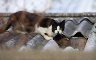 Кошка гадит на грядках. что делать?