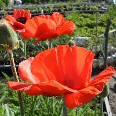 Когда и что сажать на огороде: памятка новичка-огородника