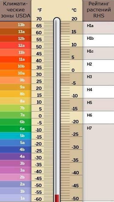 Шпаргалка для садоводов: таблица с зонами зимостойкости и морозостойкости растений