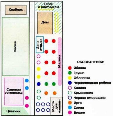 Посадка деревьев на участке: схема и фото, основные правила
