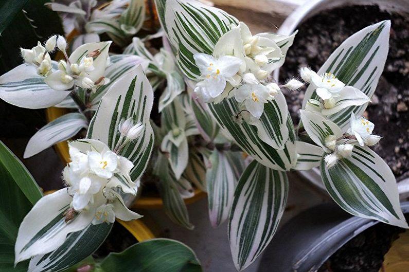 Цветущие вьющиеся растения для сада и дачи