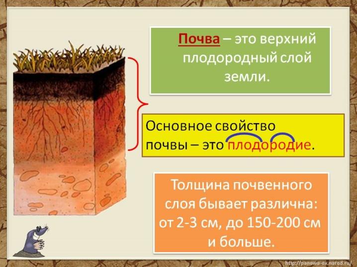 почва определение