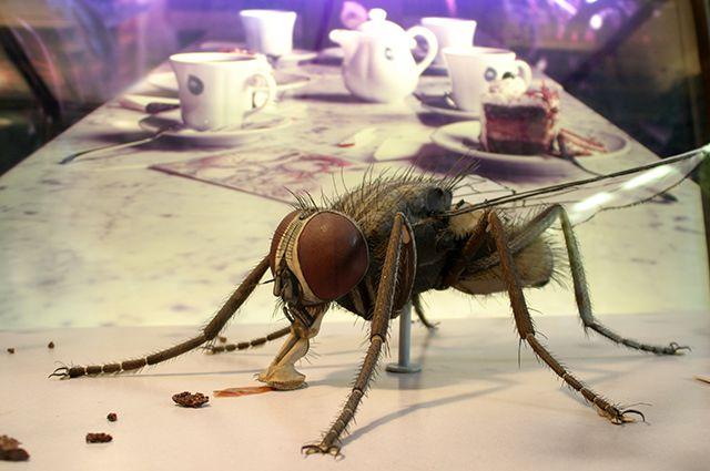 Какая польза от мух. мухи. зачем они в природе нужны?
