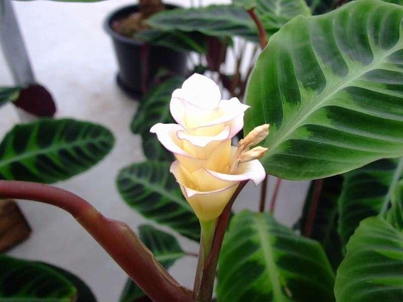 семейный цветок