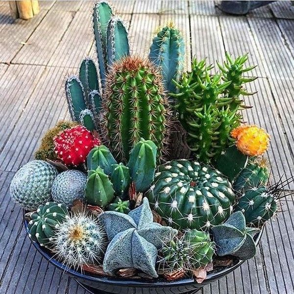 суккулентные растения