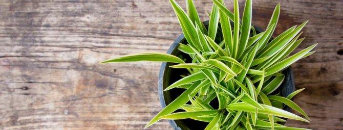 Вьющиеся цветы для сада: виды, выращивание и правила оформления