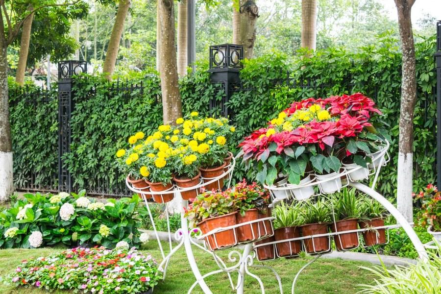 Садовые цветы многолетники: фото с названиями