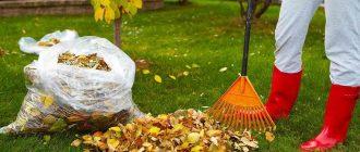 Нужно ли убирать растительные остатки из сада и огорода осенью
