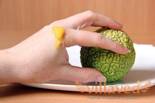 Настойка маклюры для суставов (адамова яблока): лечебные свойства, рецепты