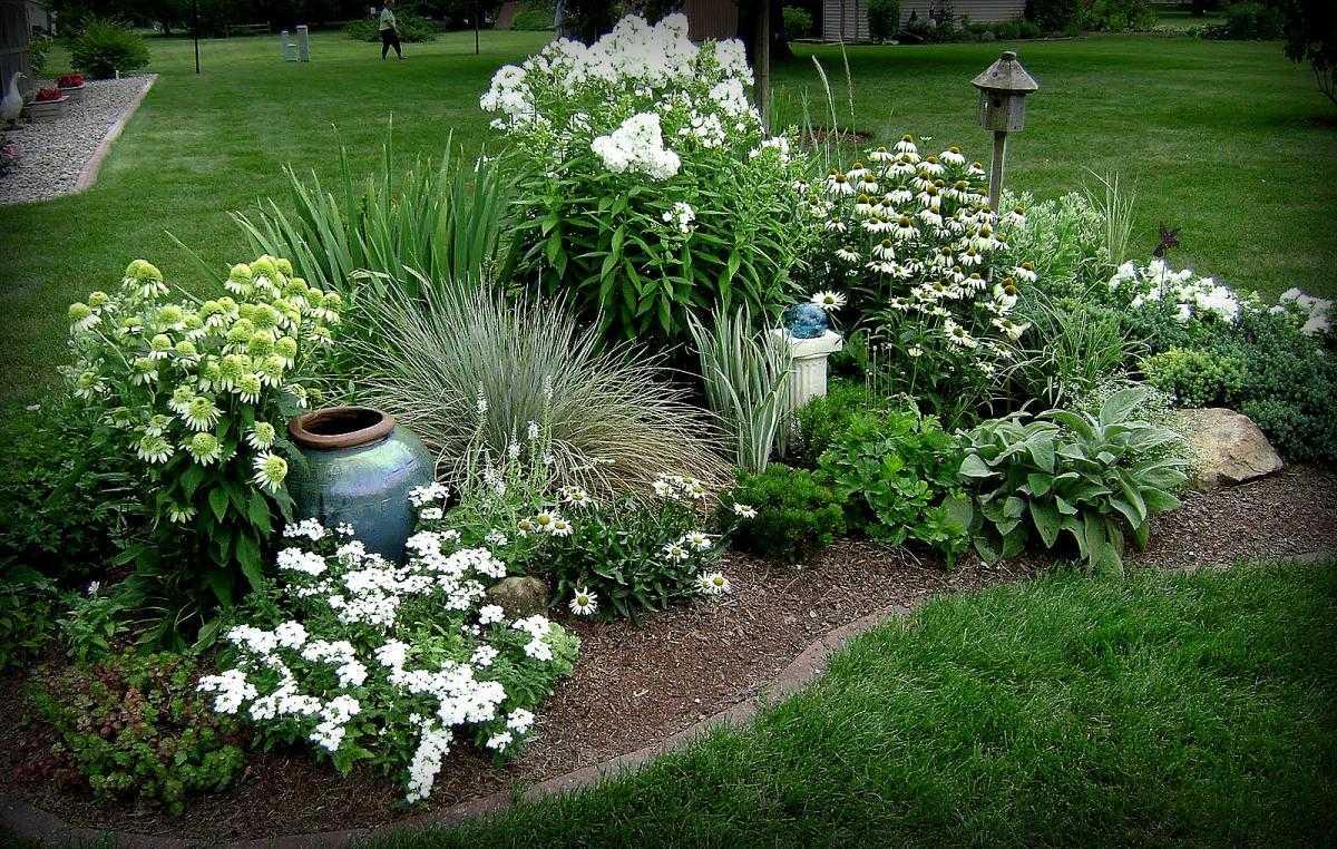 красивые клумбы из многолетних цветов