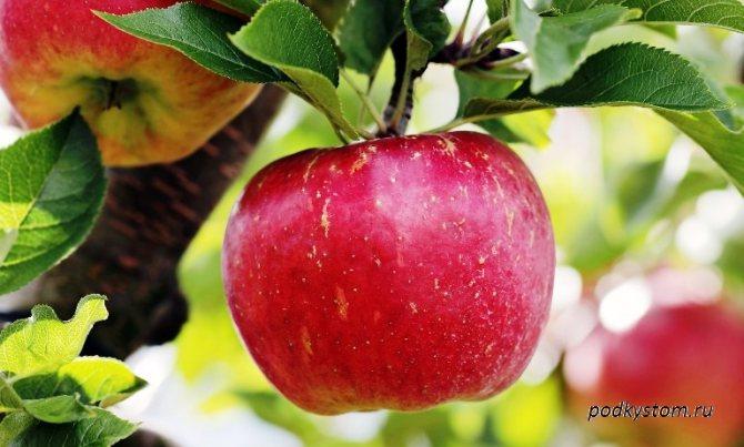 что приготовить из яблок на зиму рецепты