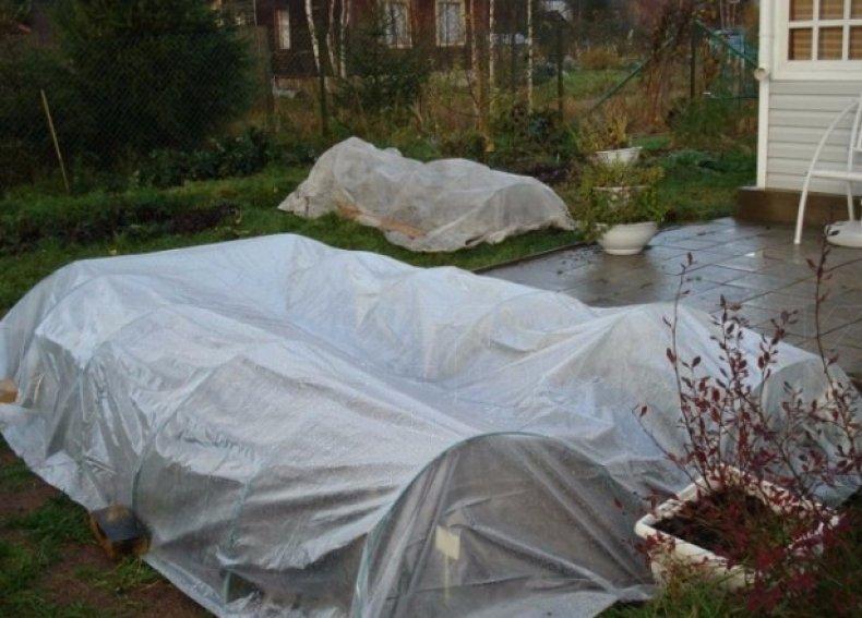 Укрытие растений на зиму