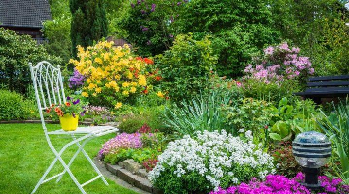 Цветы для клумбы цветущие все лето - обзор идей подбора цветов и советы по уходу за ними