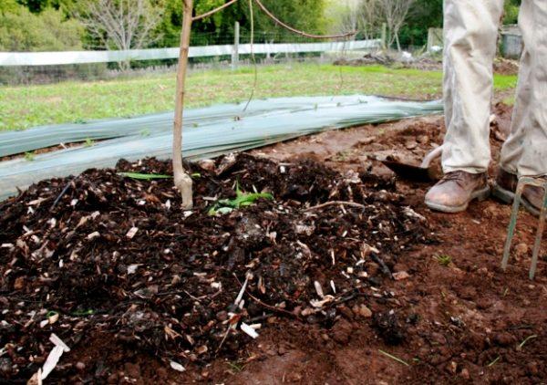 Подкормка яблонь осенью удобрениями: чем и как лучше удобрить на зиму, чтобы плодоносила, после сбора урожая