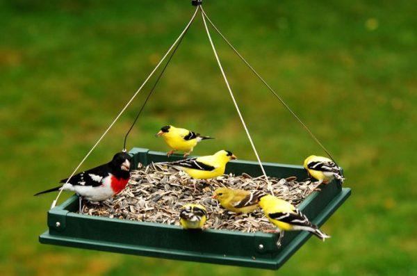 кормушка для птиц из дерева фото