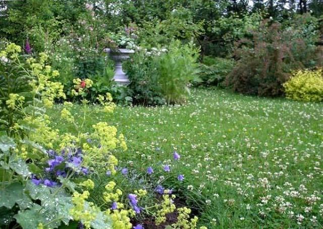 Клевер для газона (46 фото): плюсы и минусы газонного клевера, микроклевер, белый и красный, луговой или другие виды вместо травы, отзывы