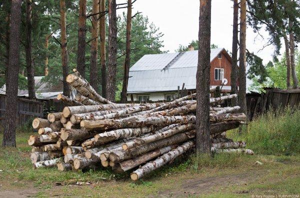 Бесплатный лес от государства. кому положен бесплатный лес.