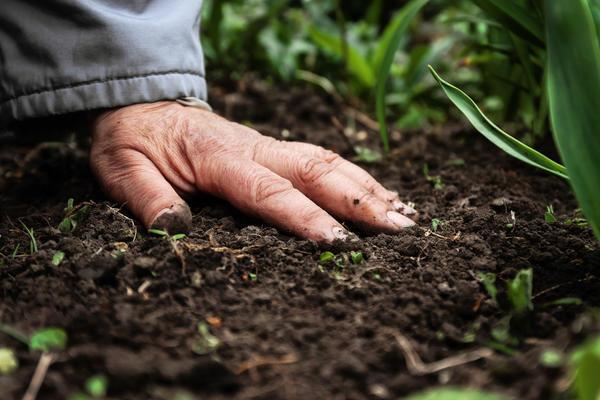 Что такое калийные удобрения, как и где они применяются