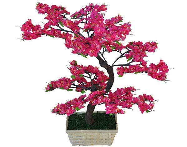 Вишня сакура: описание мелкопильчатого дерева, правила посадки и лучшие сорта