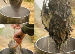 Как правильно ощипать и разделать домашнюю курицу на части