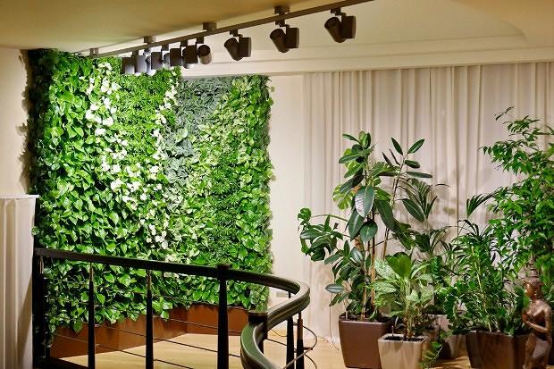 Вертикальное озеленение в квартире - огород, сад, балкон - медиаплатформа миртесен