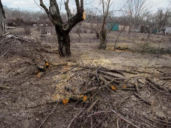 Куда жаловаться, если спилили деревья без разрешения на вашем участке или во дворе, если это были соседи, электрики или незнакомцы, и что за это грозит?