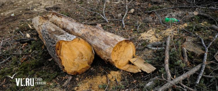 можно ли спиливать деревья на своем участке