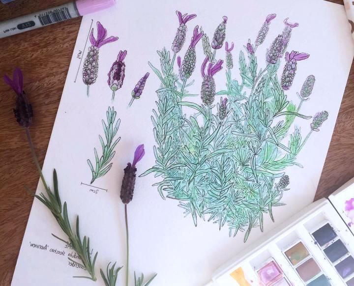 гербарий для детского сада