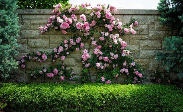 Стихи увядшая роза - сборник красивых стихов в доме солнца