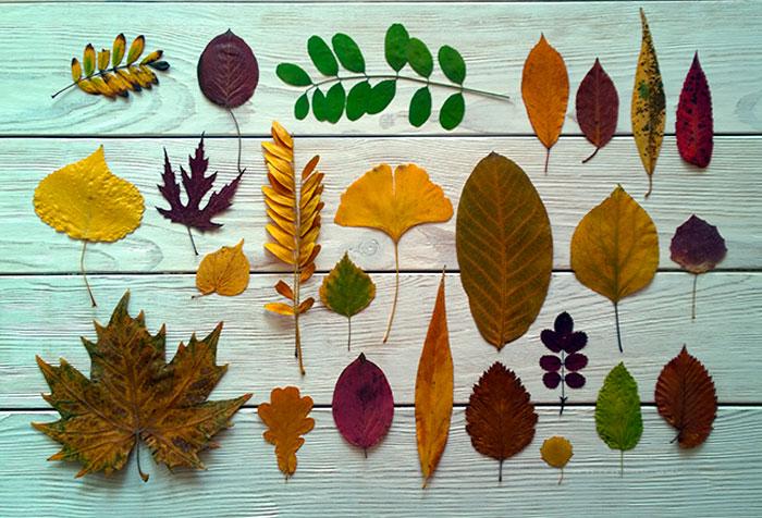 поделки из листьев на бумаге