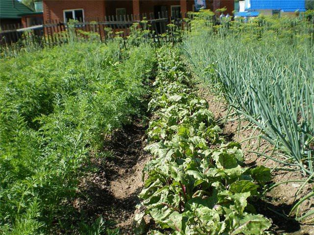 Планировка огорода, грядок и теплиц: фото, схема