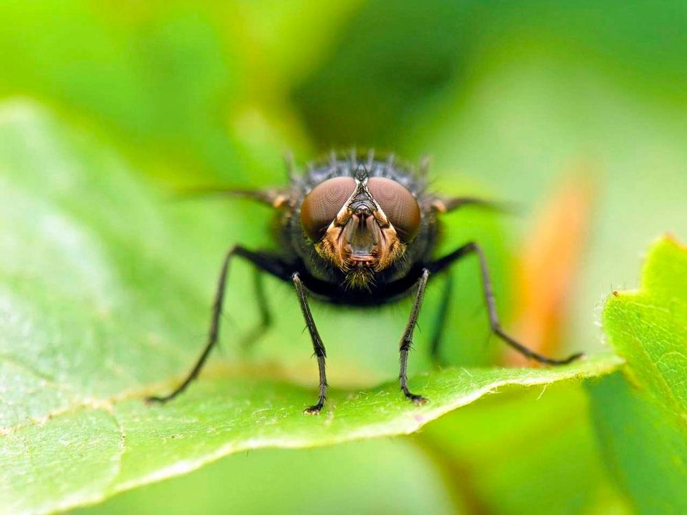 Как избавиться от мух в квартире: народные средства, химические средства
