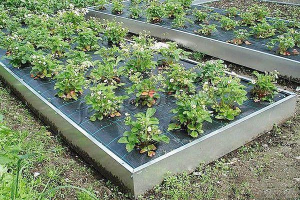 Плюсы и минусы оцинкованных грядок для огородов и теплиц