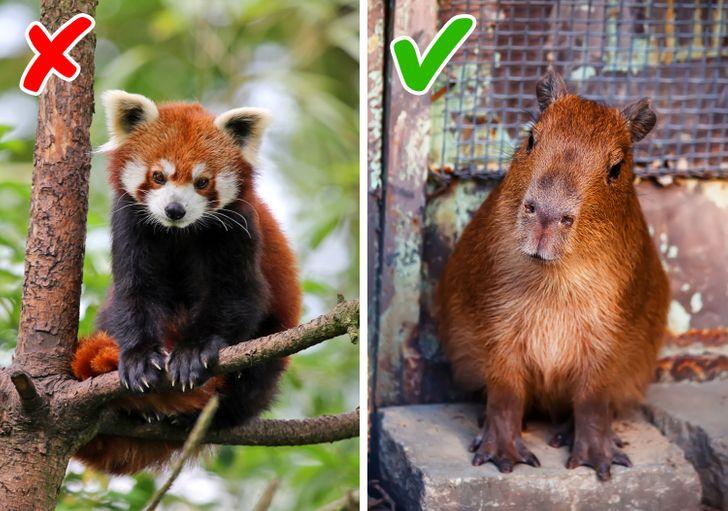 Животные, которые отлично подходят для содержания в маленьких квартирах | joinfo.com | яндекс дзен