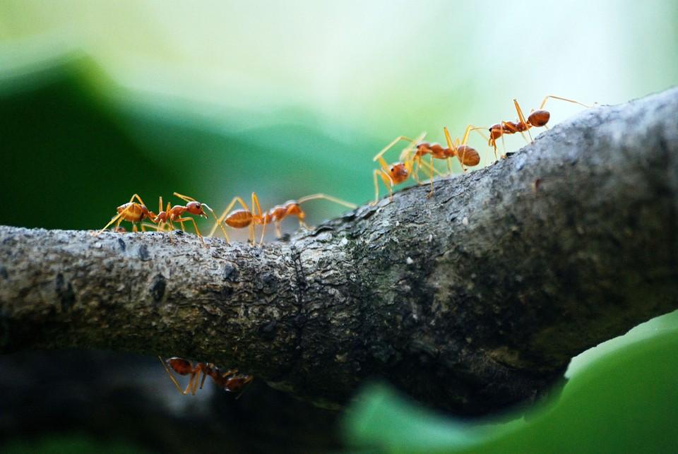 как избавиться от муравьёв на даче