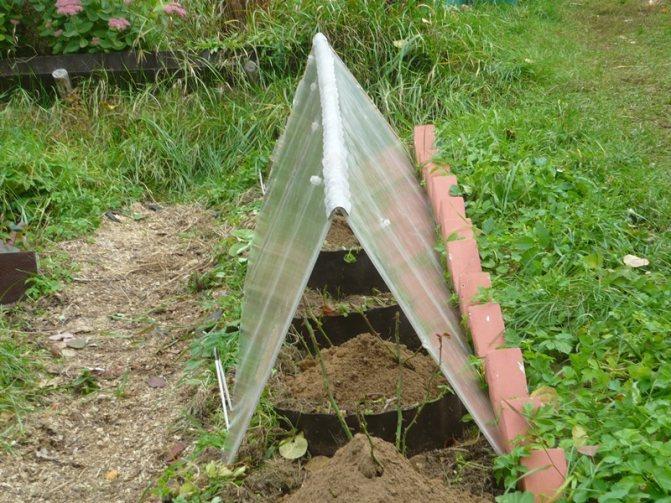Железный купорос: применение в садоводстве весной и осенью, для чего нужен, инструкция, как разводить