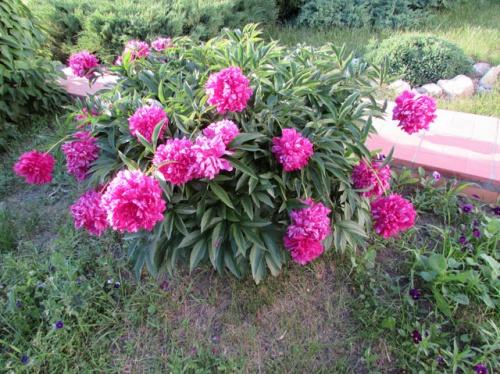 Что можно посадить на огороде. кому нужны грядки | дачная жизнь