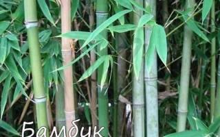 Злаковые сорняки: названия, фото, методы борьбы
