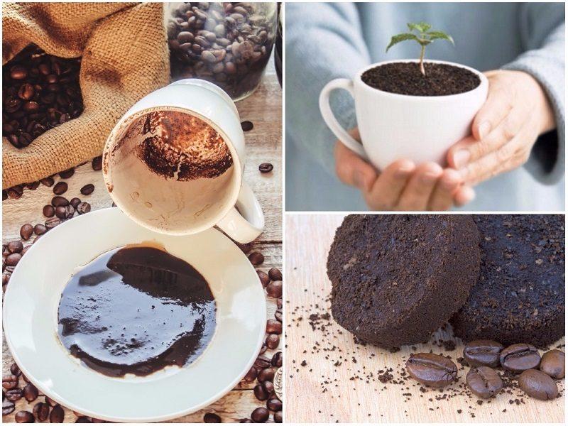Кофейная гуща как удобрение: по вкусу ли она вашим растениям?
