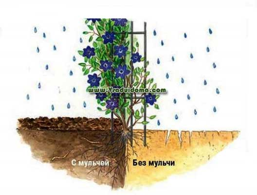 Мульчирование почвы — что это такое?