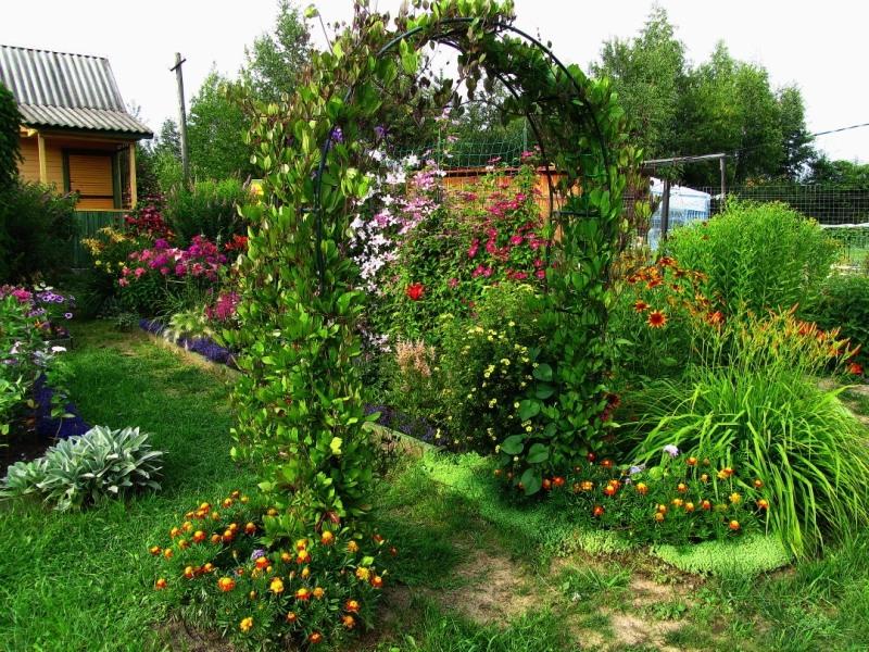 Кобея: ботаническое описание и виды, посев семян и подготовка рассады, посадка и уход